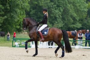 Lusitano Dressage Training Collected Trot Stock by LuDa-Stock