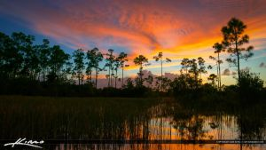 Florida-Sunset-Pine-Forest-Wetlands-Wide by CaptainKimo