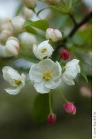 Spring Warm White by butterfly36rs
