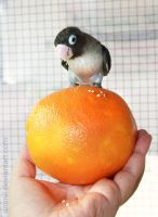 Bird on orange by emmil