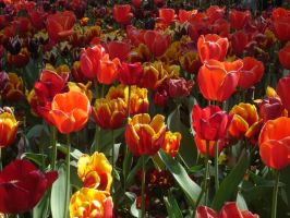 Floriade3 by twilighted-angel