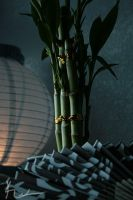 Lucky Bamboo by kedralynn