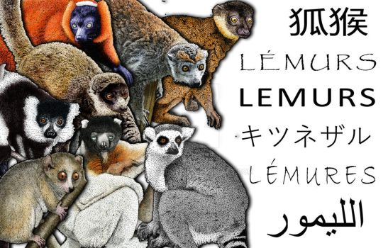Lemur Collage by rogerdhall