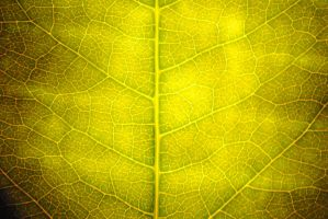 Leafy by dotgfx