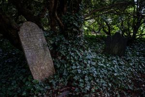 Graves In The Woods Stock.. by Alz-Stock-and-Art