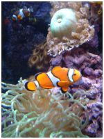 when i found nemo by lovefins