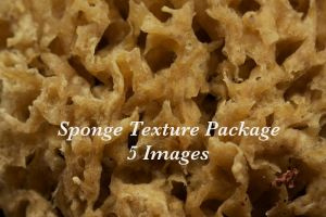 sponge texture package by bookscorpion