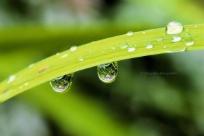 World in drops by fotografka
