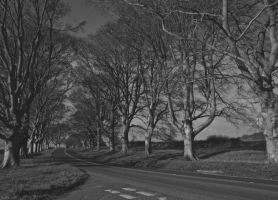 Avenue of Trees Black+White by LouisTN