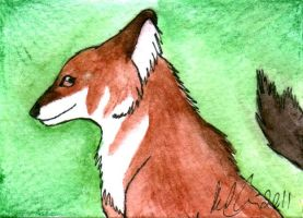 Dhole ATC-sized painting by Lyrak