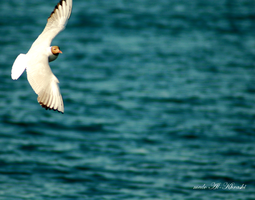 Like a Bird .. by me6o