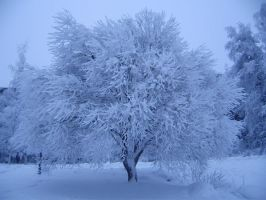 Snowy Tree 4 Stock by Kinhiae