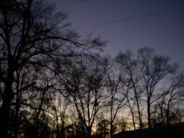 Stock - Twilight Sky Black Trees Background by Jewlgurl
