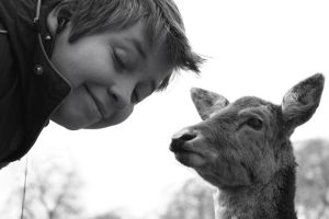 When Jay met a deer by StratocasterUK