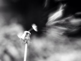 Blowing in the wind by DaRaPhotos