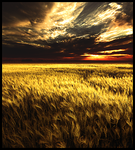 Harvest Time by Sammers1