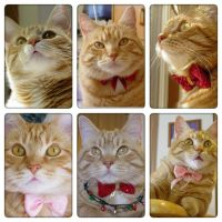 Lucy in a year by lucytherescuedcat