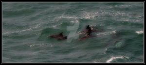dolphins by DesignKReations