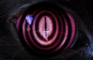 rinnegan cat eye test 2 by silvereyedsurfer