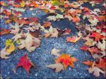 Fallen Leaves by rewstargazer