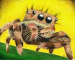 Jumping Spider by FrostyGorillaz