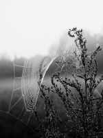 spider's web by dincha