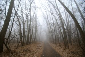 Into the foggy woods by MNgreen