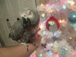Grey Bird ~ Christmas Photo Shoot by MadalynC