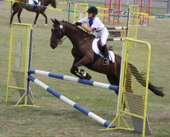 STOCK Showjumping 481 by aussiegal7
