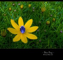Blue Bug by clarablick
