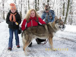 czech wolfdog  Ben 4 by Blondlupina