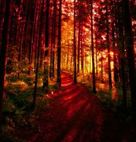 like a burning forest by KariLiimatainen