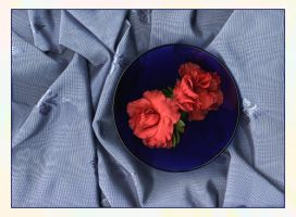 Azaleas in a Blue Bowl by redmatilda