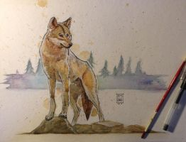 Wolf by RM-WINCH