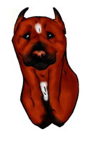 Male American Pit Bull Terrier by ArtisticDew