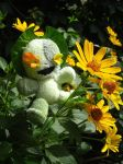 Happy Sunflower III by angelicon