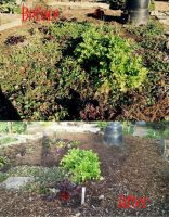 Before and After Garden by lupagreenwolf