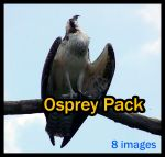 Osprey Pack by Della-Stock