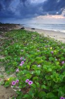 Beach Vegetation by hilmanfajar