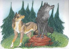 Wolfsilvermoon: Commission by NightTracker