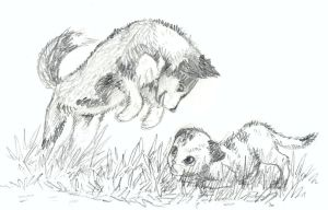 Husky and Kitten Jan3 by iesnoth