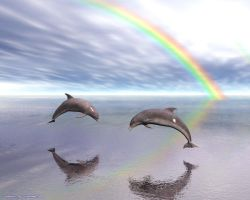 Dolphins by Bambolay