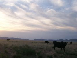 New Mexico cows by Snakelady39