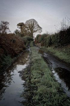 Peartree Lane by bassichris