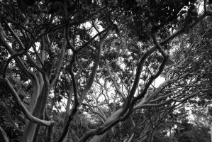 Tangled Branches by irishgirl982