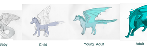 Northern Ice Dragon reference by laurel-tree