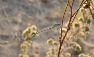 Dragonfly by asd21