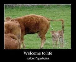 Welcome to life by cosenza987