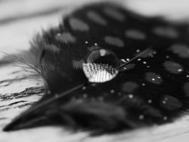 Feather and Drop by Edwige-Lch