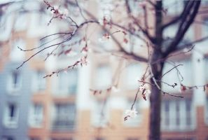 Le printemps. by leingad